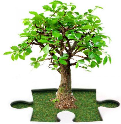 Strategie di protezione del patrimonio immateriale aziendale